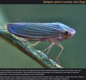 35_ballpenpointcommasizebug1
